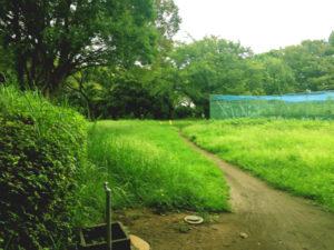 稲田公園散策路。子供連れに人気の稲田公園レポ!川崎市多摩区の多摩川沿い(関東・神奈川)