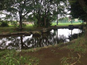 稲田公園散策路の池。子供連れに人気の稲田公園レポ!川崎市多摩区の多摩川沿い(関東・神奈川)