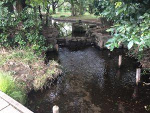 稲田公園散策路のせせらぎ。子供連れに人気の稲田公園レポ!川崎市多摩区の多摩川沿い(関東・神奈川)