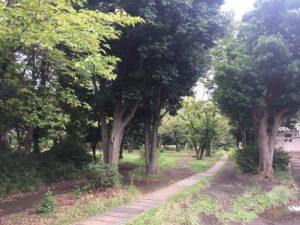 子供連れに人気の稲田公園レポ!川崎市多摩区の多摩川沿い(関東・神奈川)散策